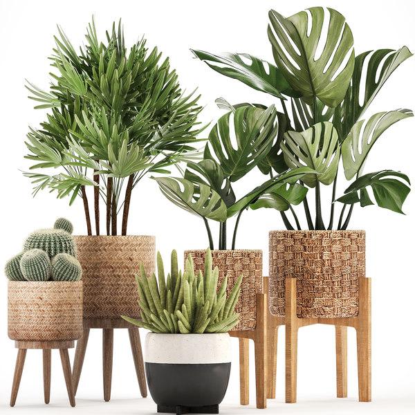 3D houseplants exotic plants