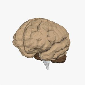 3D model brain polys cerebellum