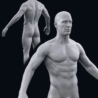 realistic male body 3D model