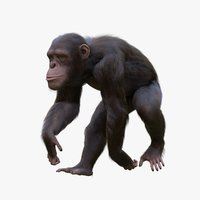 rigged chimpanzee 3D