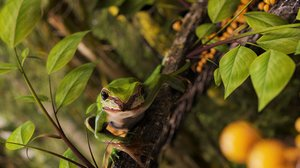 3D green tree frog model