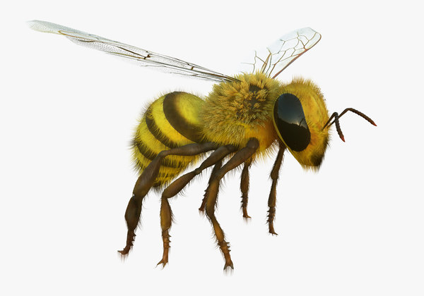rigged bee animating 3D model