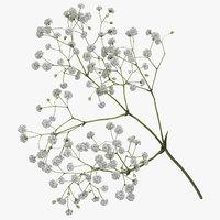 gypsophila paniculata 3D model