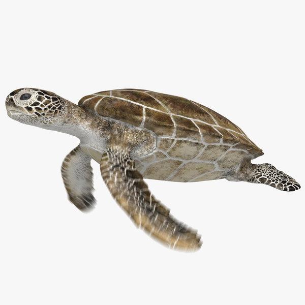 3D model green sea turtle animation