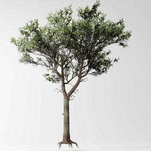 stone pine 3D