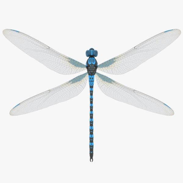 3D dragonfly model