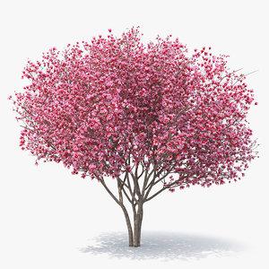 magnolia tulip tree 3D
