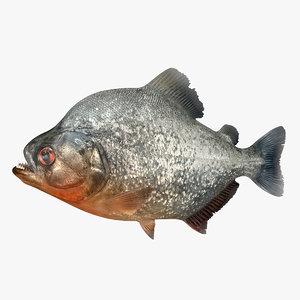 3D piranha fish rigged