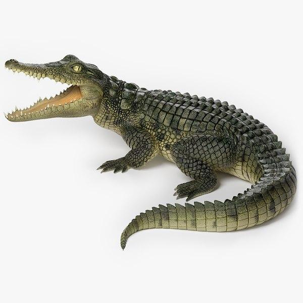 realistic crocodile 3D