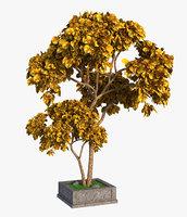 3D tree autumn