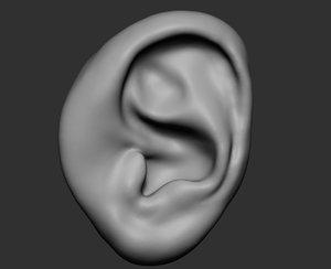 3D ear ztl zbrush