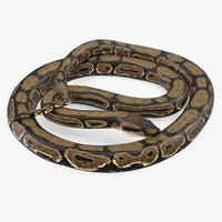 3D brown python snake curled model