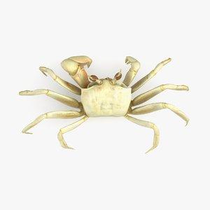 ghost crab 3D model