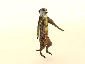 3D model suricate meerkat