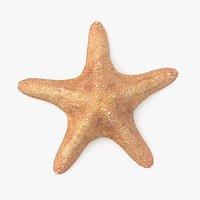 starfish pbr model