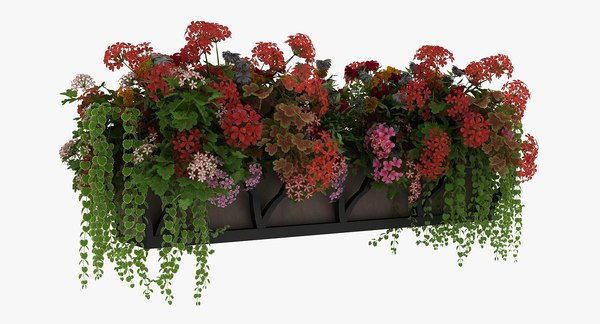 window potted plants 3D model
