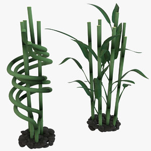 3D plant lucky bamboo