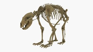 3D realistic bear skeleton rigging