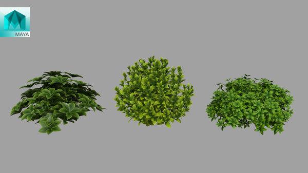 3D plant bush model