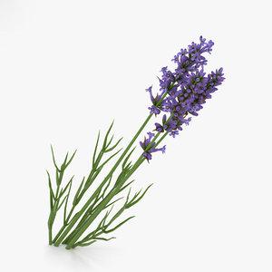 3D lavender model