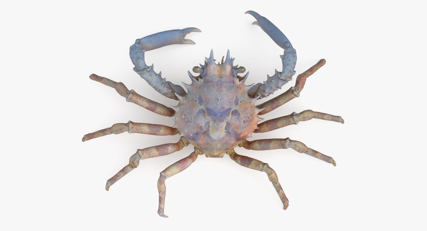 3D decorator spider crab