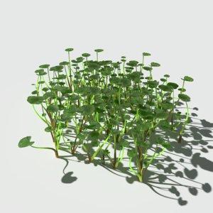 fig buttercup 3D model