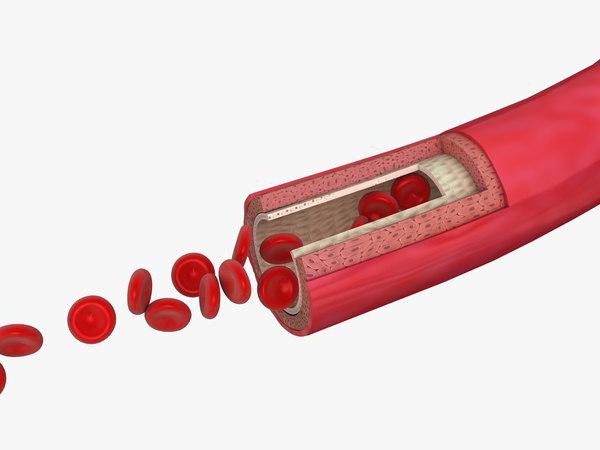 3D blood vessel artery red cell model