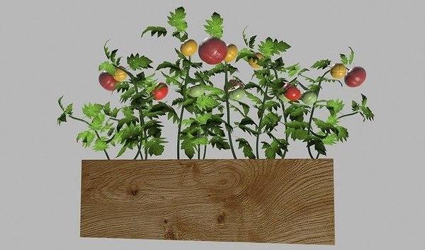 tomato pot model