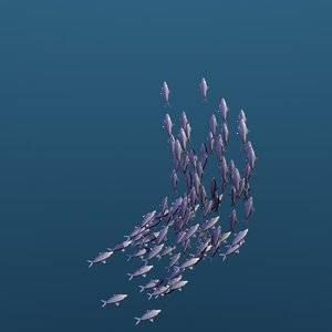 3D school swimming fishes animation model