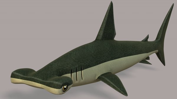 3D shark v02 cartoon animal