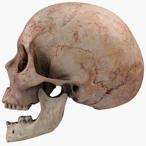 real skull 3D model