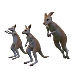 3D kangaroo rigged animation model