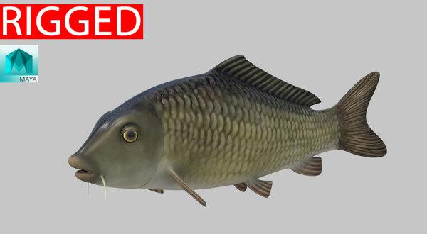 3D model fish animal