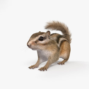 3D chipmunk mammal animal model