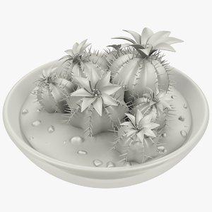 3D cactus transparent pot
