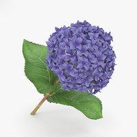 hydrangea flowers plant model