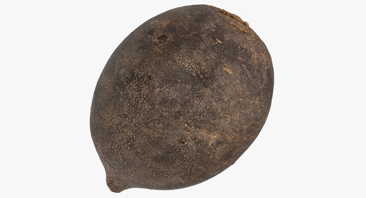 3D turnip black 03 model