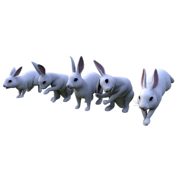 3D rabbits rigged