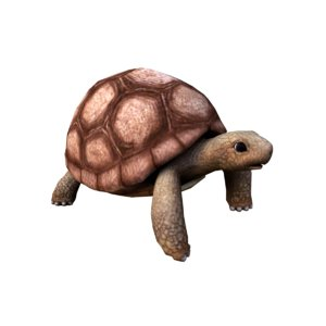 turtle animation 3D model