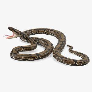 brown python snake attack 3D model