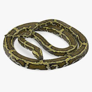 3D model green python snake curled