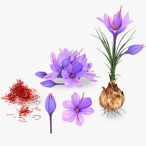3D plant parts crocus saffron model