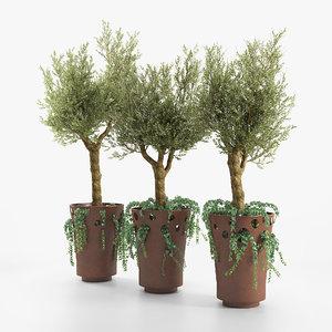3D green palacio tree