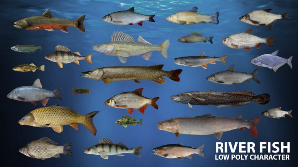 river fish animation 3D
