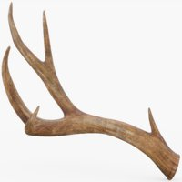 3D deer pbr model