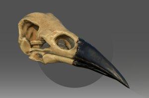 3D model raven skull