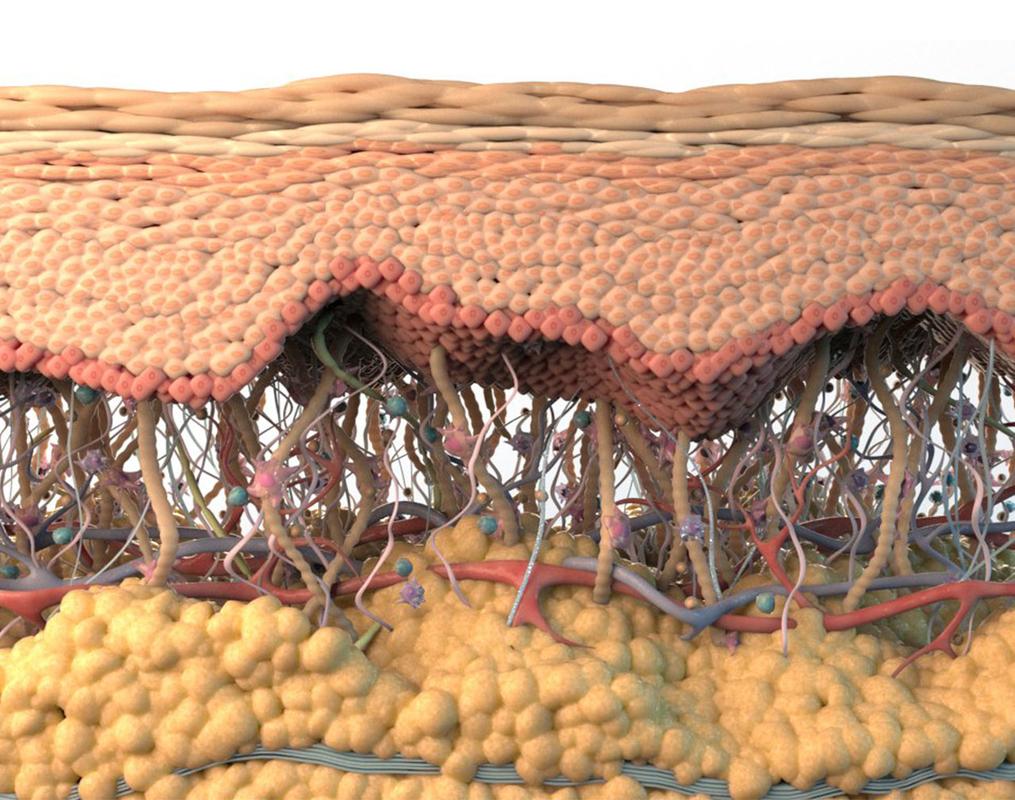 3D model cross section skin