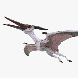 pteranodon pterosaur white rigged model