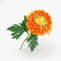 3D chrysanthemums flowers plant