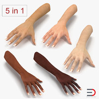 3D female hands